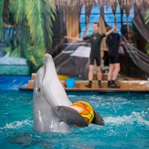 Дельфинарии, океанариумы Федоровки