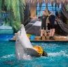 Дельфинарии, океанариумы в Федоровке